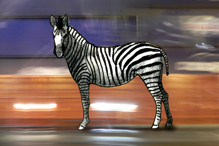 thought I was a zebra, Petra Hagedorn