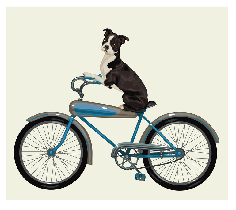 Boston Terrier on a Bike, Chris Lyons