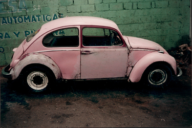 The Pink Bug