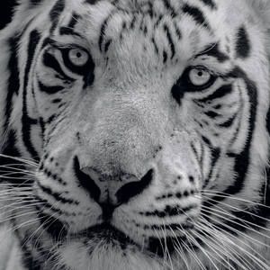 Wildlife Photography's Profile